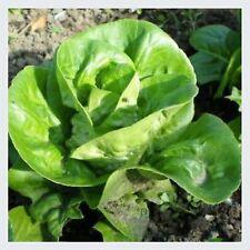Salat Romanasalat Samen - LITTLE GEM -