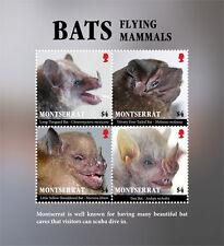 Montserrat 2017 fauna flora bats-I70095