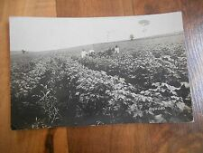 Old Vintage or Antique Poscard Algodao Cotton Field Horse Donkey People...