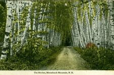 Monadnock, NH Road through the Birches
