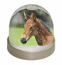 Pretty Foal Horse Photo Snow Globe Waterball Stocking Filler Gift, AH-10GL
