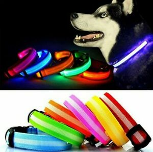 USB Rechargeable LED Light Up Dog Collar Pet Accessories Neon Night Safety UK