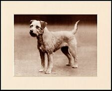 BORDER TERRIER STANDING DOG LOVELY SEPIA PRINT MOUNTED READY TO FRAME