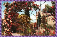 Carte Postale - NICE - Le Monastère - les jardins a Cimiez