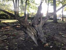 New listing 1000+yr Old Extra Huge Appalachia Cedar Driftwood Stump Sculpture Aquarium Art