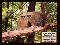 The Spotted Owl is Endangered