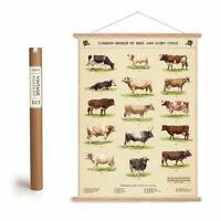 Cursive Writing Penmanship Art Poster Hanging Kit