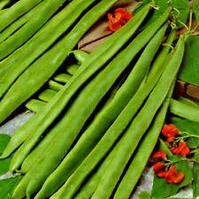 Vegetable Runner Bean Lady Di Stringless - 50 seeds