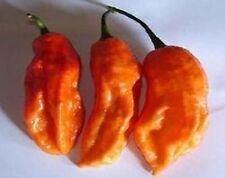 Weltmeisterscharf: RAJA MIRCH NAGA orange bis zu 100000 Scoville, 10 Samen