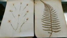 Lot of 34 Antique Pressed Botanical Specimens-San Jose, Ca