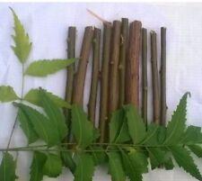 NEEM DATUN 100%FRESH ORAL HERBAL TEETH & TONGUE CLEANER 10 Chewing Sticks