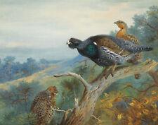 Thorburn Archibald Capercaillie Canvas 16 x 20   #5586