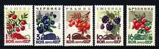 SOVIET UNION - RUSSIA - 1964 - Frutti di bosco