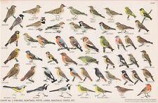 RSPB - Bird Cards - 1960 - N.W.CUSA . Chart N° 2 - 325X210