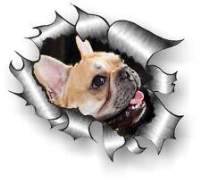 CLASSIC Ripped Open Torn Metal Rip & Cute French Bulldog Dog vinyl car sticker
