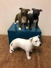 Brown Staffordshire Bull Terrier Dog Black Staffy White Staffie Ornament Gift