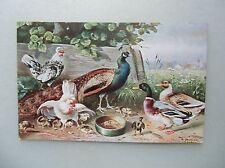Ansichtskarte Enten Hühner Pfau um 1910 (Schönian F.E.D. Serie 116) Geflügel