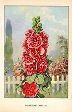 "1926 Vintage GARDEN FLOWER ""HOLLYHOCK"" GORGEOUS COLOR Art Print Lithograph"