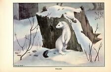 """1926 Vintage Animals """"Weasel"""" White In Snow Gorgeous Color Art Print Lithograph"""