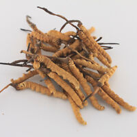 1g Cordyceps sinensis whole dried mushrooms (Yartsa Gunbu, caterpillar fungus)