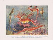 Fetzenfisch Seepferdchen  (Hippocampus spec.) Seenadel  Farbdruck von 1912