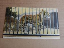 Postcard  Tiger at the Zoo Colour card  Unposted