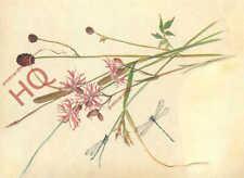 Picture Postcard: Edith Holden, Beaked Sedge, Common Rush, Great Burnet