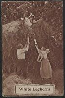 Victorian Postcard of Ladies and Man in a Haystack White Leghorns Comic 1910