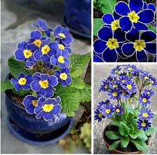 Showy 100Rare New Blue Evening Primrose Seeds Easy to Plant Garden Decor Flower