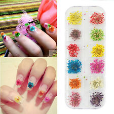 12 Colors Real Nail Dried Flowers Nail Art Decor DIY Tips Manicure Stickers new