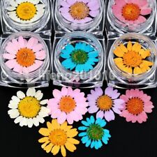 6 colors dried flower for 3D nail art decoration natural beauty nail dry flowers