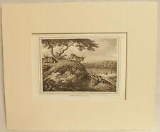 The Rabbit, Copper Plate Engraving, Howitt 1812