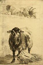 A.BALZER (1771-1807),  Blökende Ziege und Gruppe von Schafen, Rad.