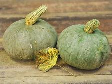 Pumpkin, Blue Hokkaido, Japanese heirloom, 3 Seeds