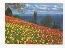 Insel Mainau im Bodensee Germany Postcard 444a