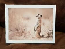 "Kitty'S Note Cards - Set of 10 + Envelopes - ""Meerkat Lookout"""
