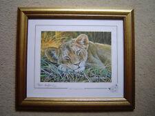 Stephen Gayford Animals Art Prints