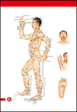 4 Acupuncture Human Body Charts with 438 Points of Body for moxibustion& massage