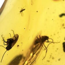 More details for 2 winged ants & 10 flies in dominican amber miocene fsr323 ✔100%genuine