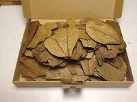 200 Stück 10-15cm - Seemandelbaumblätter / Catappa Leaves / Wasseraufbereitung