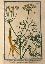 Hortus Romanus Volume 5 G. Bonelli 1778 Partial Text 11 Hand Colored Plates