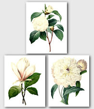 Set of 3 Botanical Prints, White Camellia, Magnolia, Peony Flowers, 8 x 10""