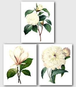 "Set of 3 Botanical Prints, White Camellia, Magnolia, Peony Flowers, 8 x 10"""