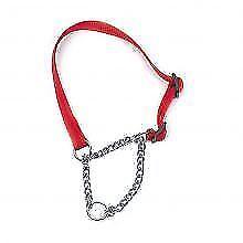 Colliers rouges en chaîne pour chien