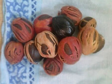 10 Muskatnuß / Muskatnüsse in Schale teilw mit Macis original St. Lucia Karibik