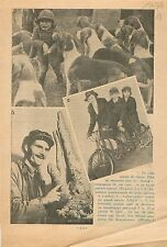 Dogs Chiens de Meutes/Triplex-Cycle International Exhibition 1936 ILLUSTRATION