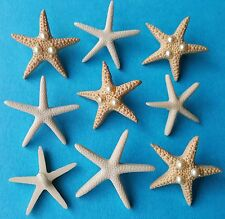 STARFISH WISHES Star Fish Sea Pearl Ocean Marine Animal Dress It Up Craft Button