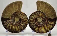 "e2968xx Cut Split Pair Ammonite Deep Crystal Cavity 110myo Fossil 178mm Xxl 7.0"""