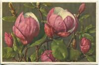 VINTAGE WHITE PINK MAGNOLIA FLOWERS BOTANICAL HORTICULTURE ART POSTCARD PRINT