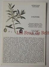 Carte postale Astrologie gauloise,arbre, olivier,  CPSM